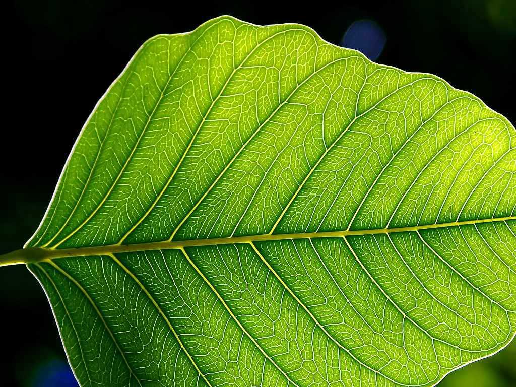 Manfaat Matahari Sebagai Pengaktif Klorofil