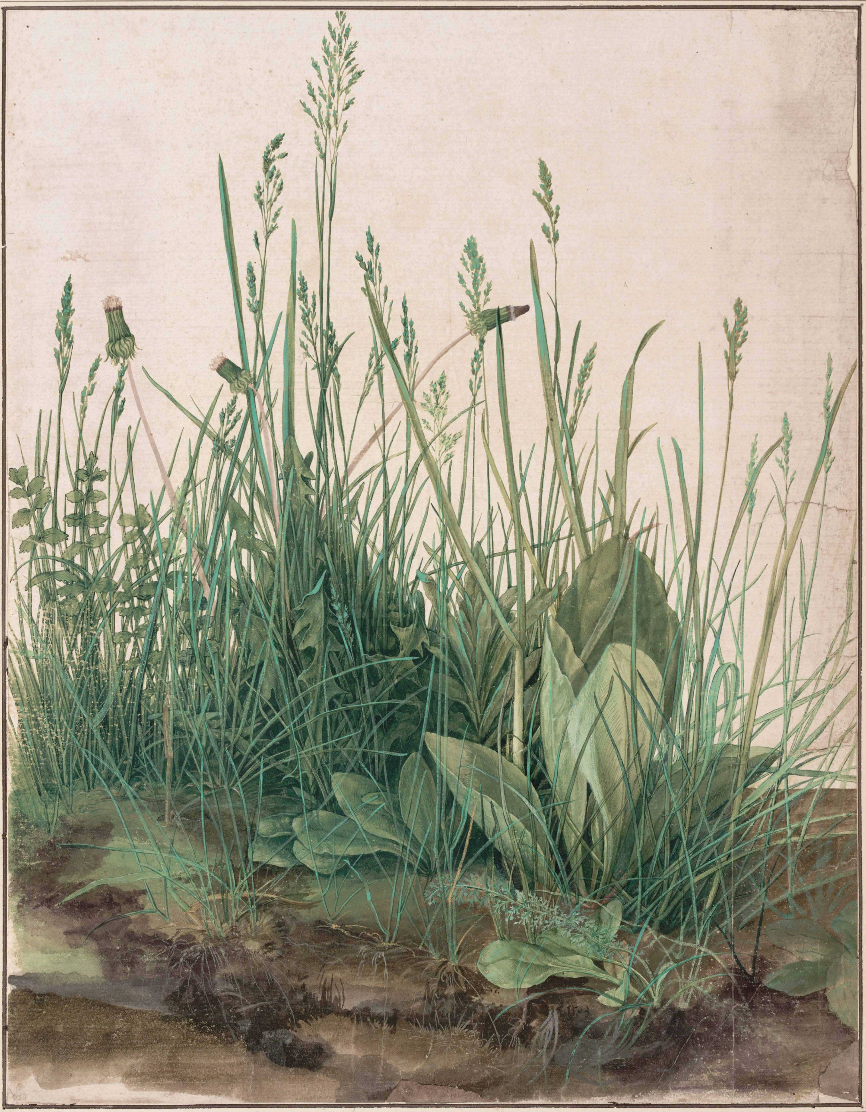 https://i2.wp.com/upload.wikimedia.org/wikipedia/commons/f/f6/Albrecht_D%C3%BCrer_-_The_Large_Piece_of_Turf%2C_1503_-_Google_Art_Project.jpg