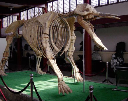 Wikipedia picture of gomphotere skeleton