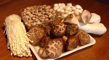 is mushrooms allowed in paleo diet