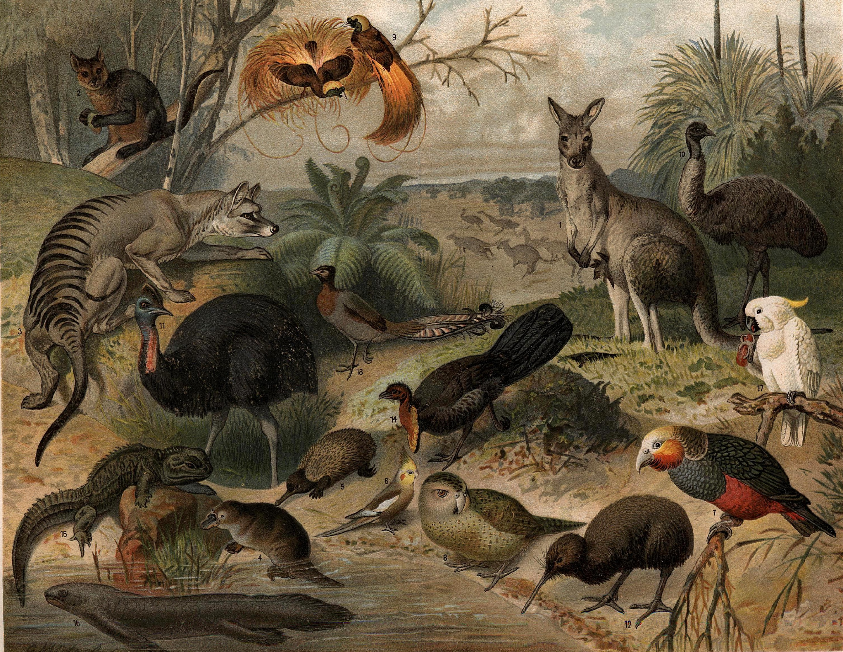 https://i2.wp.com/upload.wikimedia.org/wikipedia/commons/f/fc/Australisk_fauna,_Nordisk_familjebok.jpg
