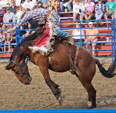 Bronco rodeo