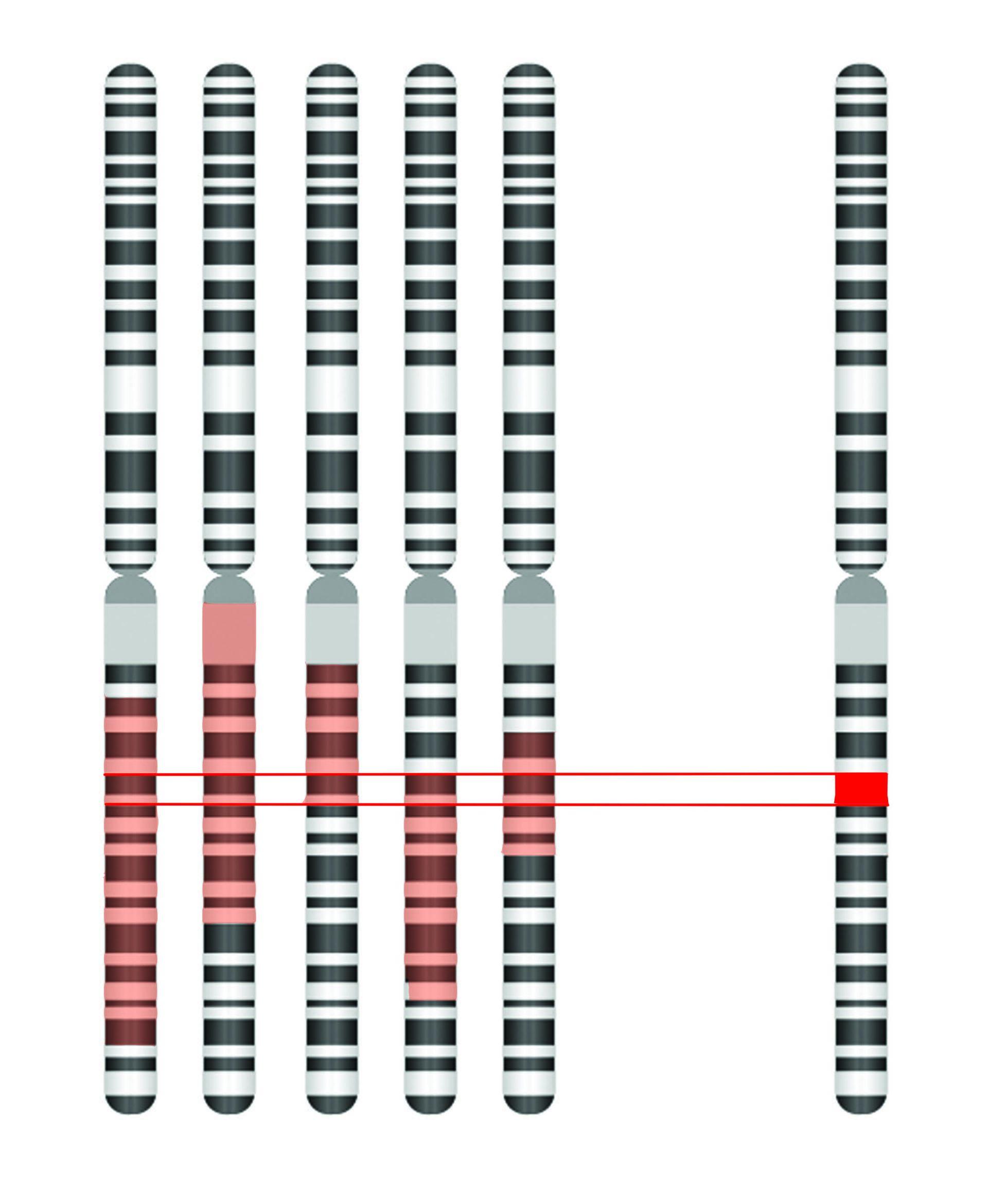 Dna Gene Genome Chromosome