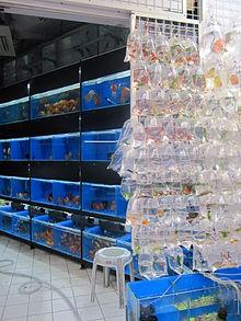 Aquariophilie Wikipdia