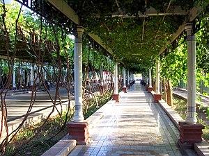 Qingnian Lu, a Turpan city street shaded by gr...