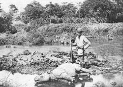 Pemburu Eropa dengan badak Jawa yang terbunuh tahun 1895