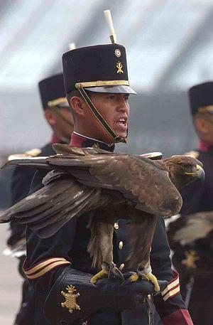 Infantry Sergeant Cadet 2nd class, holding a g...