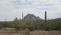 Monumento nazionale Arizona 2014 irregolare della foresta di Ironwood