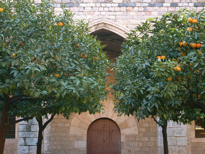 File:Barcelona orange tree.jpg