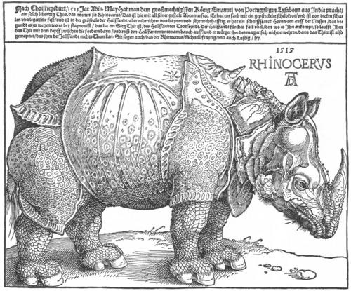Dürer rhino full