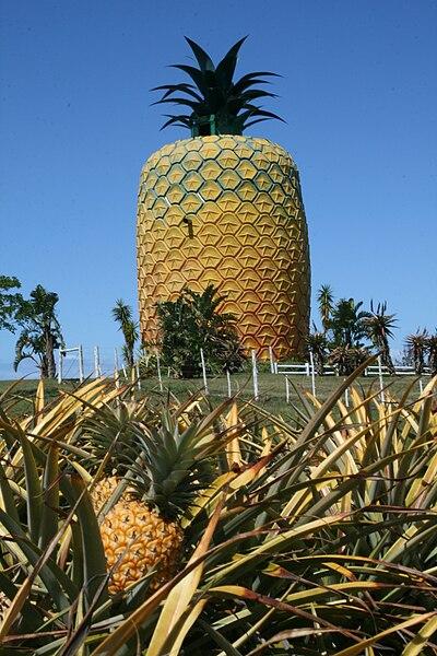 File:Eastern Cape-Big Pineapple-001.jpg