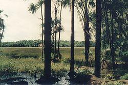 Trecho da Amazônia próximo à Macapá (1990).