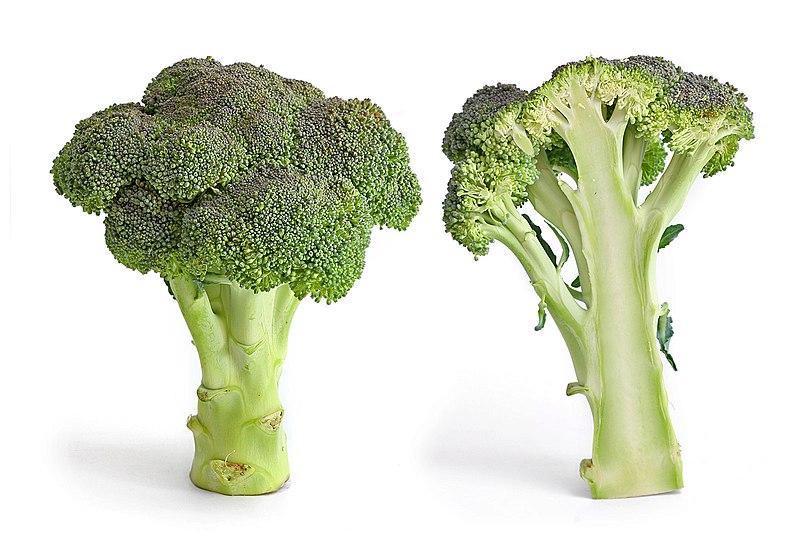File:Broccoli and cross section edit.jpg