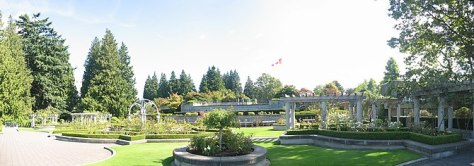 A panorama of the Rose Garden at the Universit...