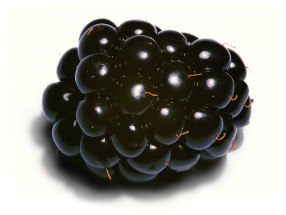 All hail the Blackberry, thorny fruit