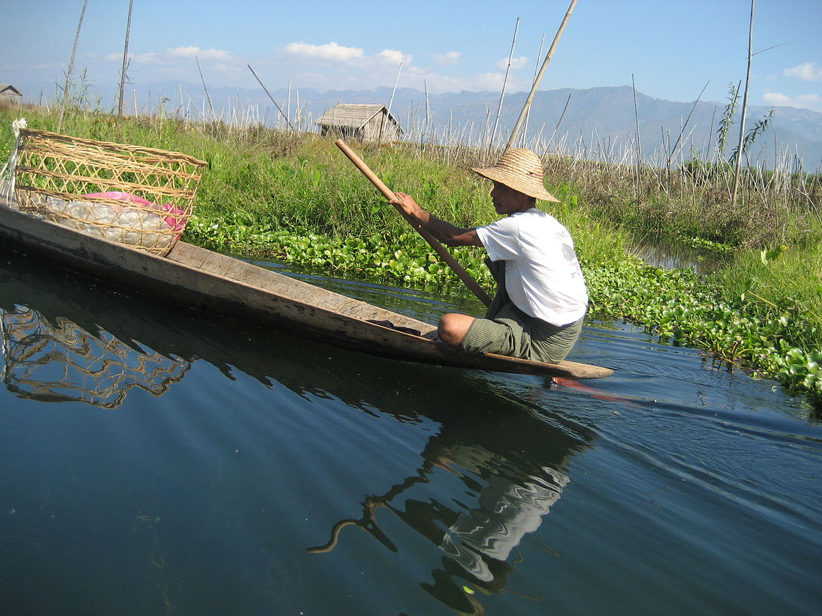 Buy Water Hyacinth
