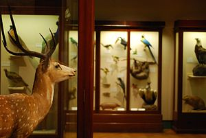 The taxidermic collections of Bristol City Mus...