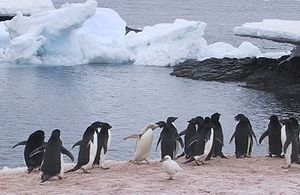 English: I took this photo on Gourdin Island i...