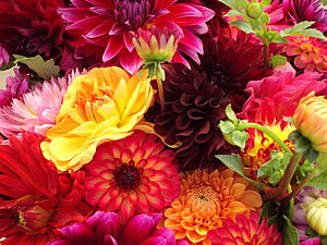 A bunch of varying types of flowers at an open...