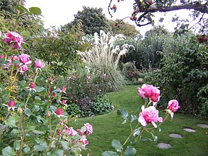 English: Coolaught Garden; early autumn Pink r...