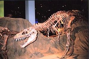 A dinausaur in Royal Tyrrell Museum 加拿大皇家蒂勒尔博物...
