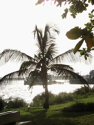 English: Palm tree in Paramaribo.