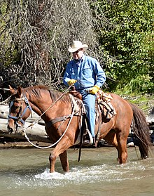 Albert rides through a river on a guided tour in the Shoshone National Forest in the U.S., September 2013