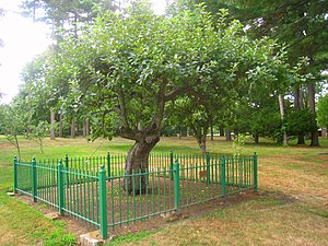 Isaac Newton apple tree, Babson College, 231 F...