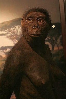 La Australopithecus Lucy en el Museo de la Evolución de Varsovia