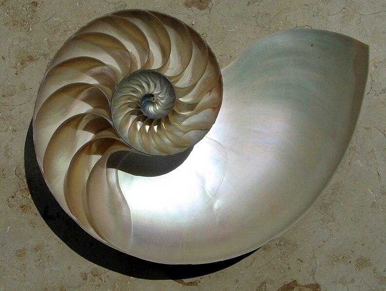 Nautilus Shell Spiral @ Wikipedia