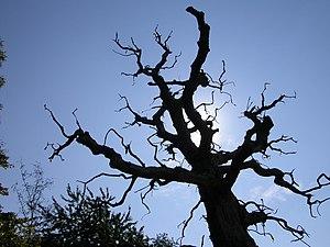 "The ""Spooky Tree"""