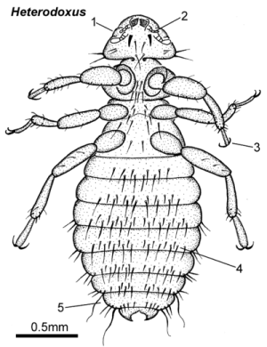 Parasitic Insects, Mites and Ticks: Genera of Medical and Veterinary ImportanceChewing lice