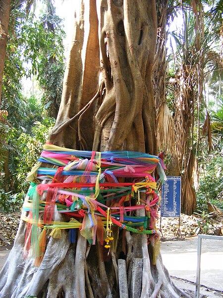 Arbre à voeux Wat Kham Chanot, Thailande