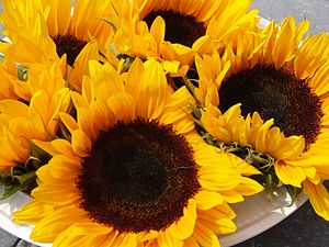 Nederlands: Some sunflowers