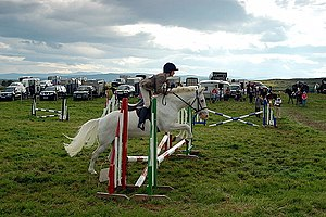English: Horse Jumping at the 2008 Lairg Croft...