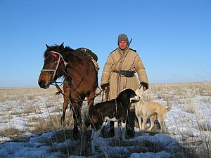 Kazakh shepherd with dogs and horse