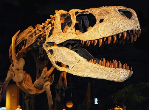 Appalachiosaurus.jpg