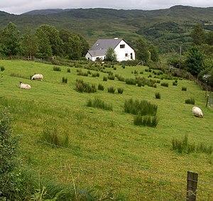 Nature's lawnmowers