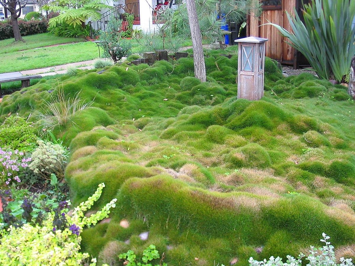 Landscaping Pebbles Sale