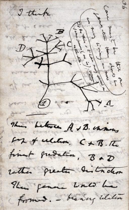 Darwin Tree 1837