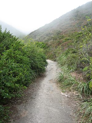 The old Pedro Mountain Road