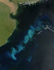 English: Phytoplankton bloom in the South Atla...