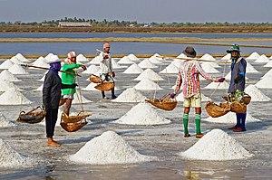 Salt farmers harvesting salt, Pak Thale, Ban L...