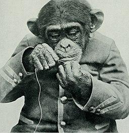 Otro chimpancé vestido de persona