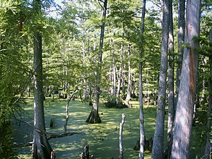 Big Cypress Bayou in Jefferson, Texas