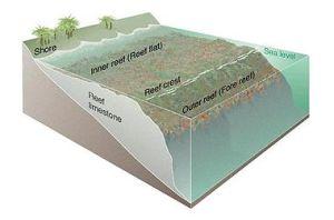 Fringing reef  Wikipedia