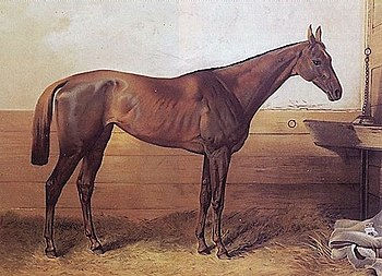Kincsem, Ch.m. 1874, undefeated winner in 54 s...