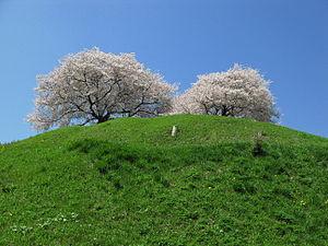 Maruhakayama Tumulus and cherry trees (Gyōda, ...