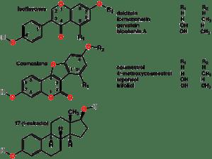 Phytoestrogen  Wikipedia