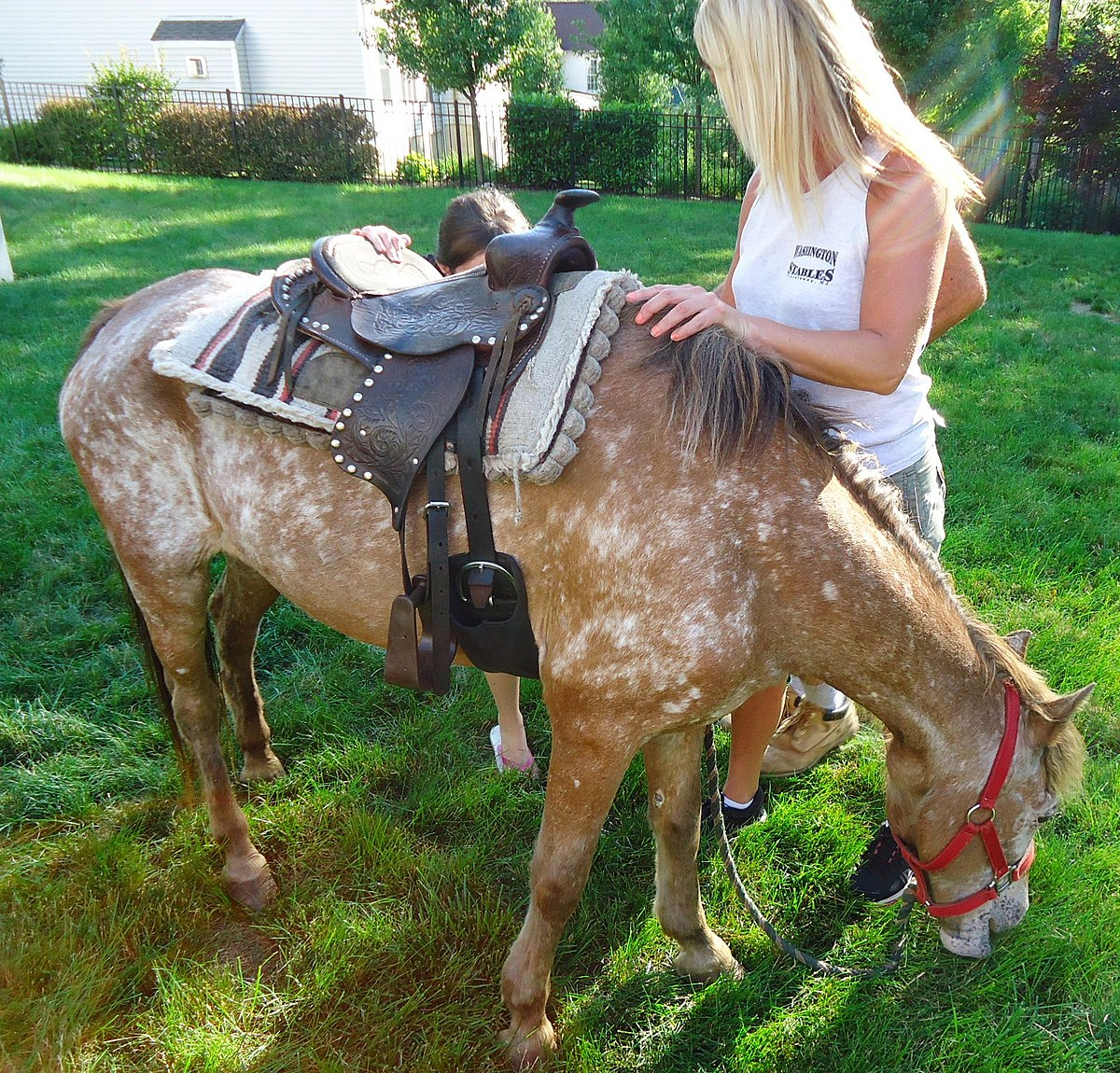File Pony Ride At A Kids Birthday Party With Pony Eating Backyard Grass Jpg Wikimedia Commons
